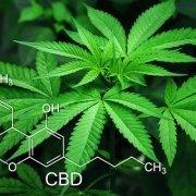 Das CBD, Cannabidiol kann eine Heilmittel für viele körperliche Probleme sein